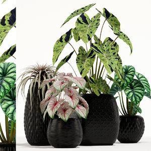 plants 137 3D model