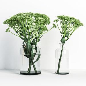 sedum vases model
