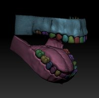 human mouth 3D