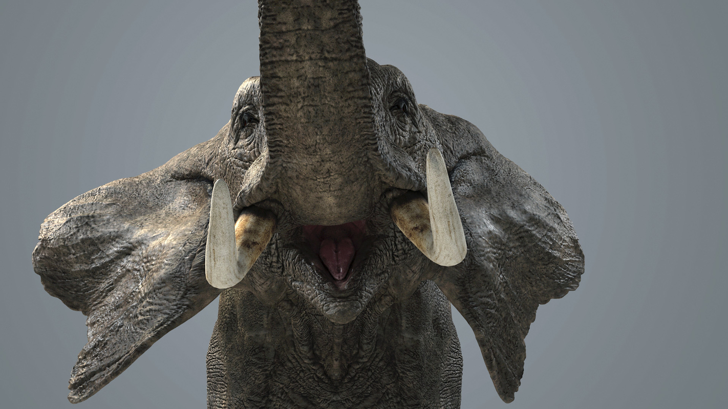 3D model photorealistic elephant animations