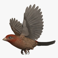 3D model rigged house finch