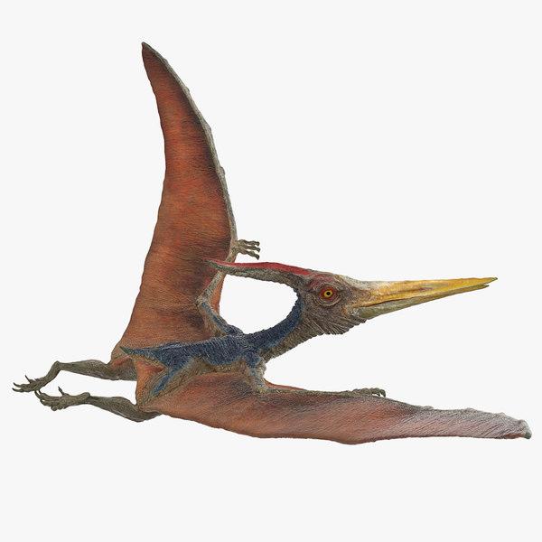 3D pteranodon flying pose model