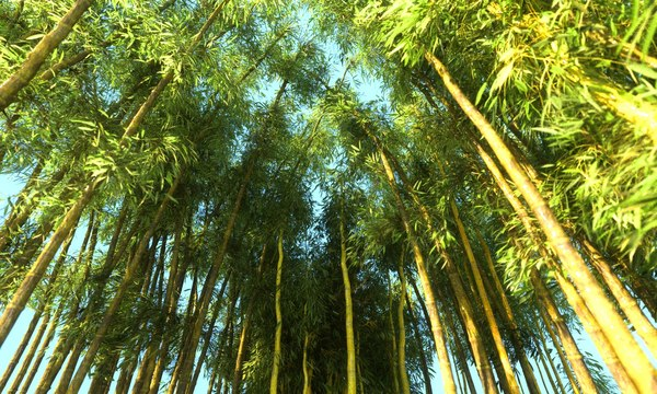 3D bamboo forest pack 10 model