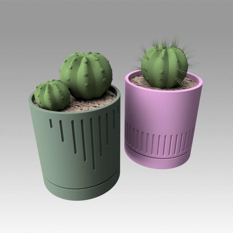 modeled cactus model
