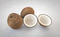 3D model coconut