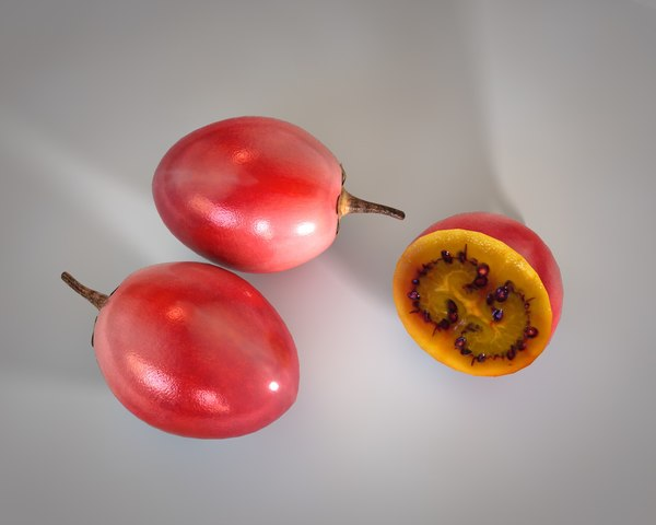 cocoa fruit model