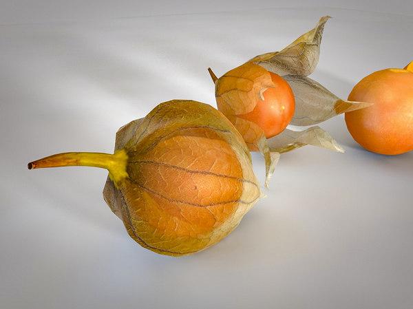 cocoa fruit 3D