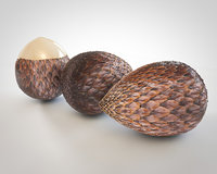 3D cocoa fruit