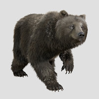 3D bear rig animation character