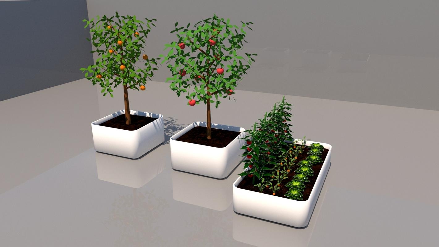 vegetable food gardening 3D model