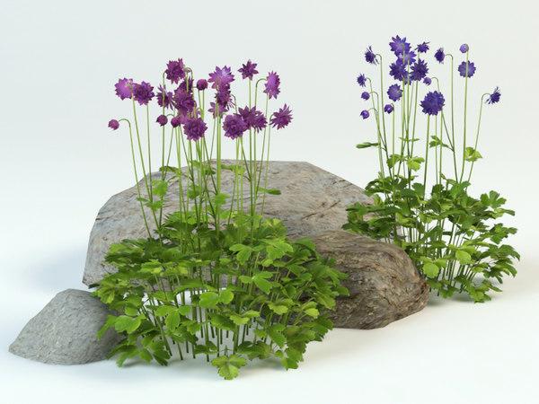 3D aquilegia vulgaris landscape bushes