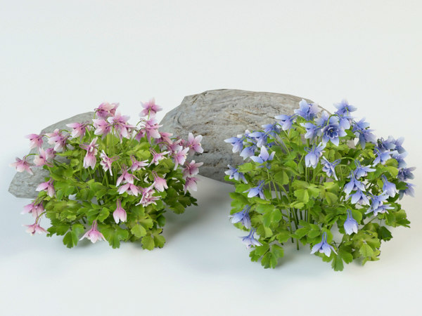 3D aquilegia flabellata landscape model