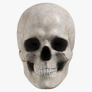 3D male skull