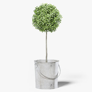 boxwood plant bucket 3D