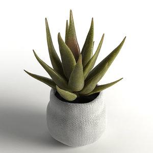 faux aloe plant model