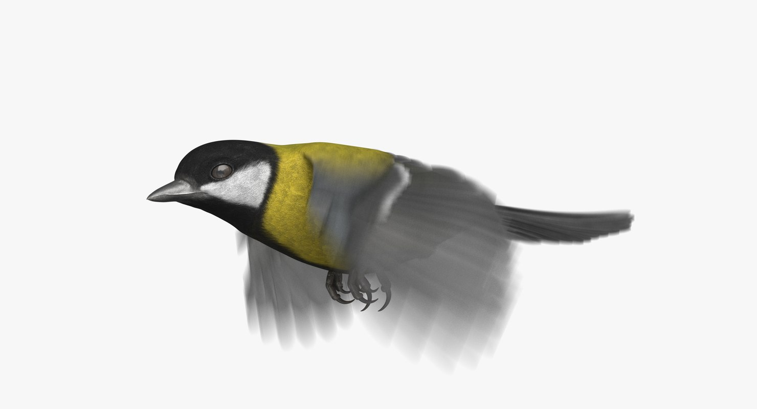 3D great tit animation