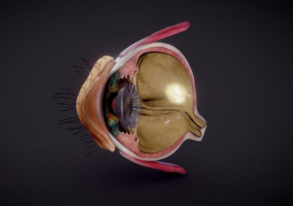 3D eye retina