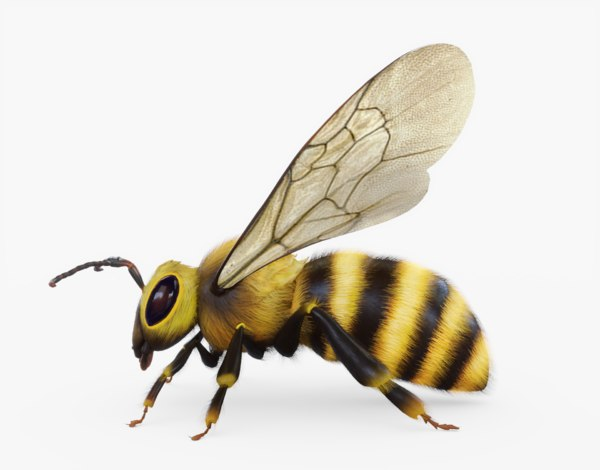 bee animations 3D model