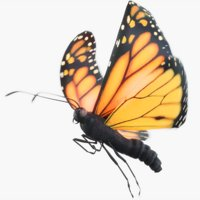monarch butterfly animations 3D model