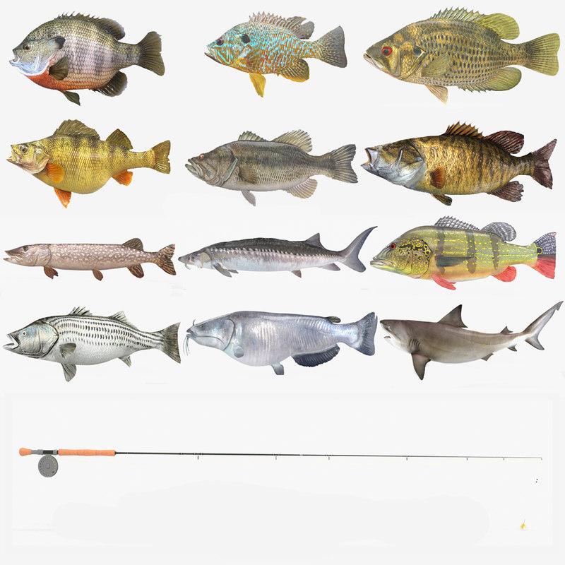 fish bluegill sunfish 3D model