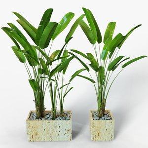 3D banana plant model
