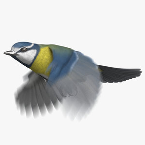 eurasian blue tit animation 3D model