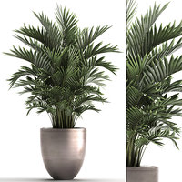 decorative palms howea 3D