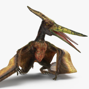 3D pteranodon flying carnivorous reptile model