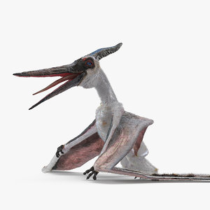 pterosaur pteranodon white standing model