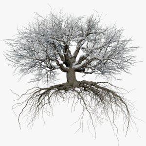 oak winter 5 tree 3D model