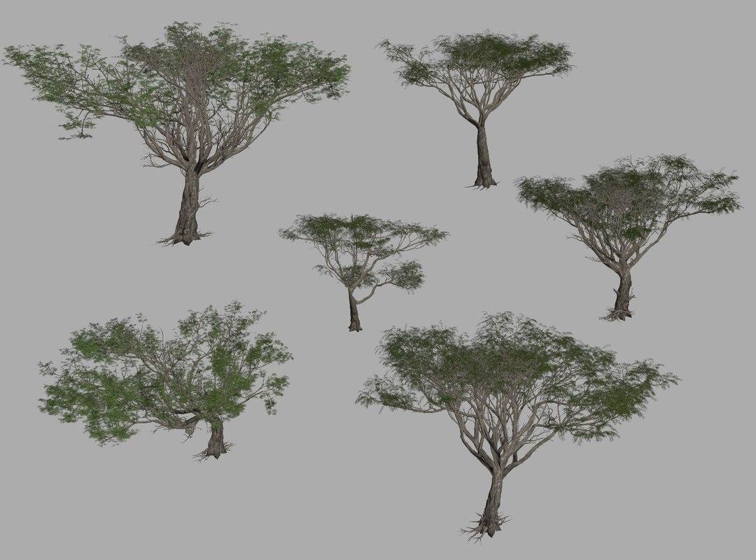 Acacia Trees 3D Model