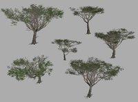 Acacia tree set
