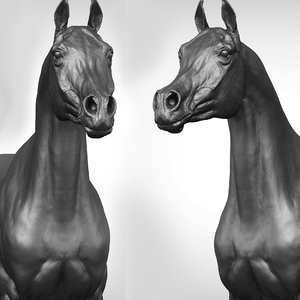 project arabian horse model