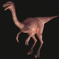 3D carnivore predator