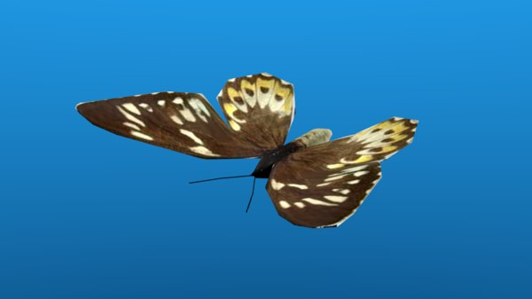 butterfly butter fly model