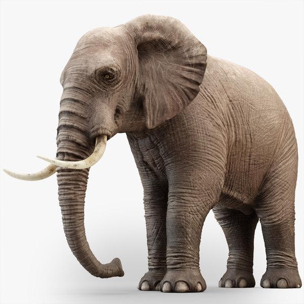 3D rigged elephant model