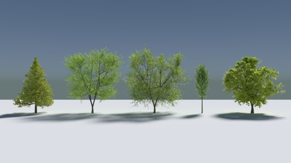 pbr realistic tree 3D model