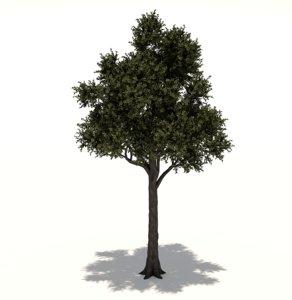 3D cupressaceae tree
