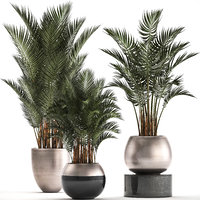 decorative palms howea plants 3D