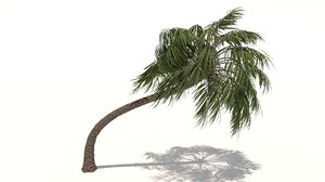 3D curly palm tree model
