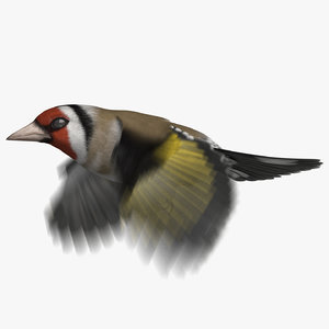 3D european goldfinch animation