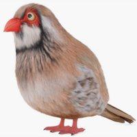3D partridge rig