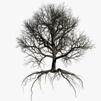 3D model oak dry 1 tree