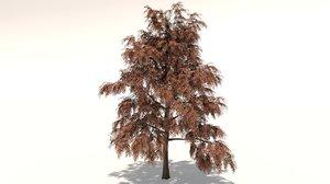 delonix tree 3D model