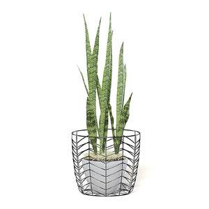 3D snake plant white pot model
