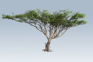 3D branches leaves