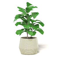 fig plant wicker basket 3D model