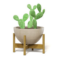 3D cactus brown pot