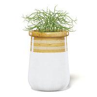 plant large modern pot 3D model