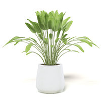 3D model large plant white pot